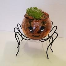 Spider Planter with Succulent, Halloween Pot, Sempervivum, Hens and Chicks image 3