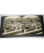 Antique Keystone Stereoview Card-Great Union Stock Yards, Ch - $38.00