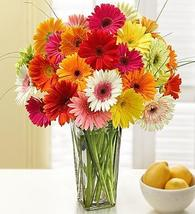 1-800-Flowers Two Dozen Gerbera Daisies with Clear Vase - $65.99+