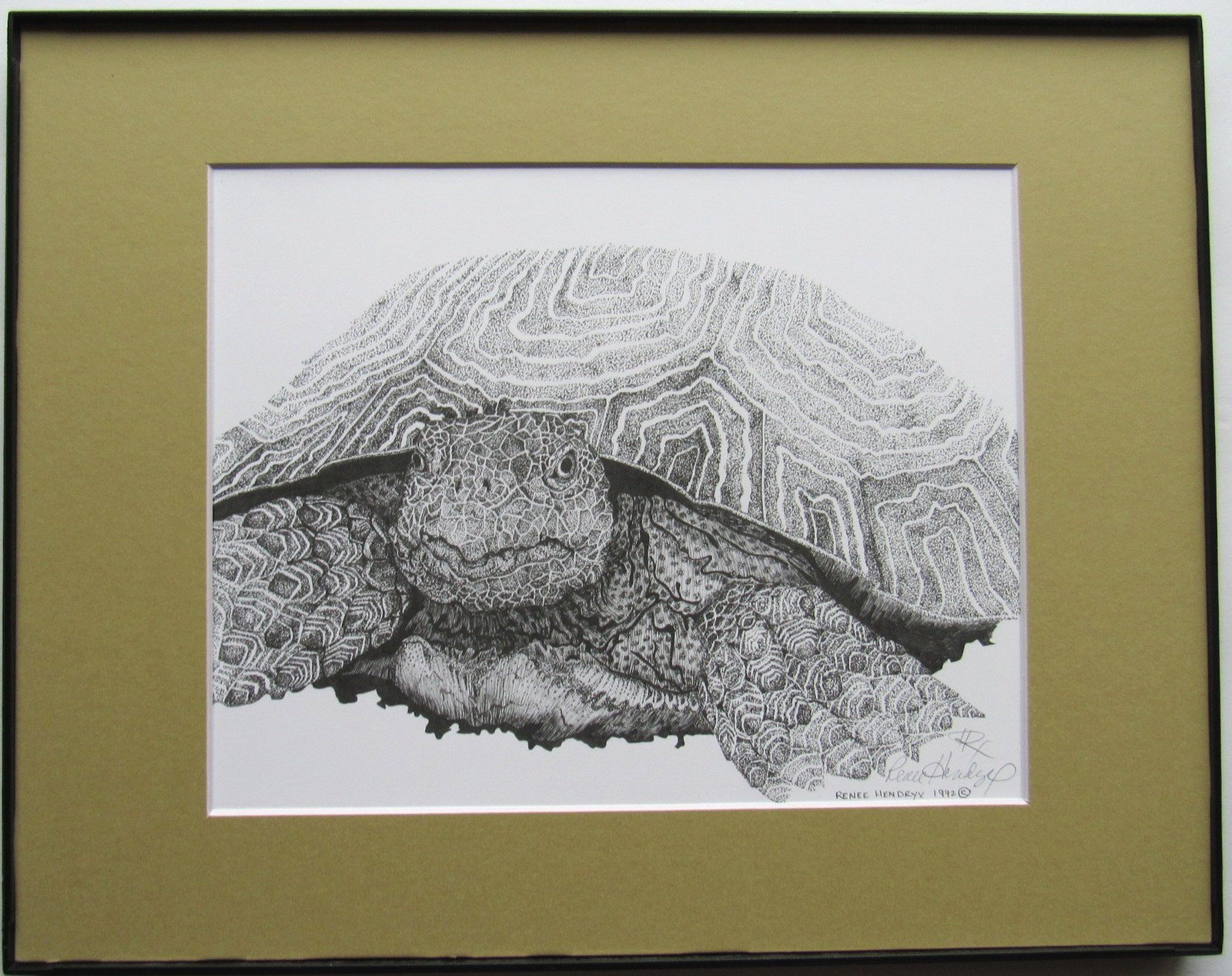 Desert Tortoise, Turtle, Framed Wildlife Art Print, Pen and Ink, Animal Art Prin