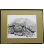 Desert Tortoise, Turtle, Framed Wildlife Art Print, Pen and Ink, Animal ... - $39.00