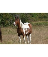 Chincoteague Mare Freckles Photo - Pick One Image - Various Sizes - $7.50+