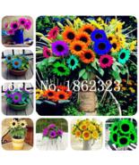 New 30 Pcs mixed seed Mini Multi-colored Dwarf Sunflower Bonsai Perennia... - $7.20