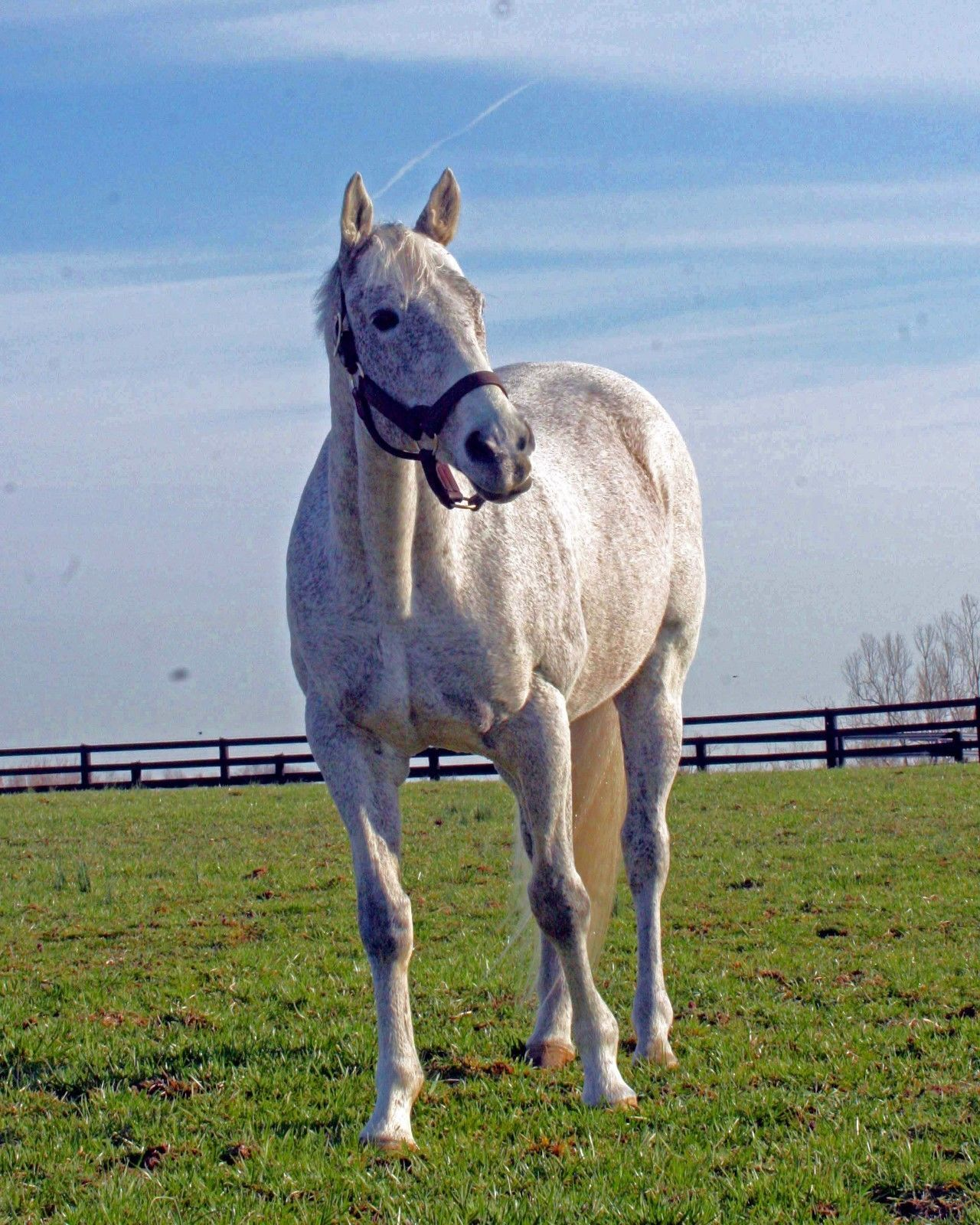 Primary image for COLOR PHOTO - 8x10 Holy Bull  at Jonabell Farm -1994 Horse of The Year from2011