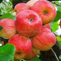 Best Price 10 Seeds Delicious Bonsai Apple,Diy Fruit Seeds E3664 Dg - $4.89