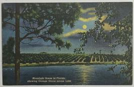 Old VTG Linen Era Postcard Moonlight Scene in Florida Orange Grove Acros... - $11.71