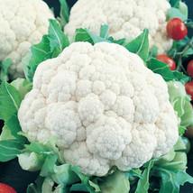 1000 Snowball Y Improved Cauliflower Brassica Oleracea Seeds + Gift - CO... - $1.25
