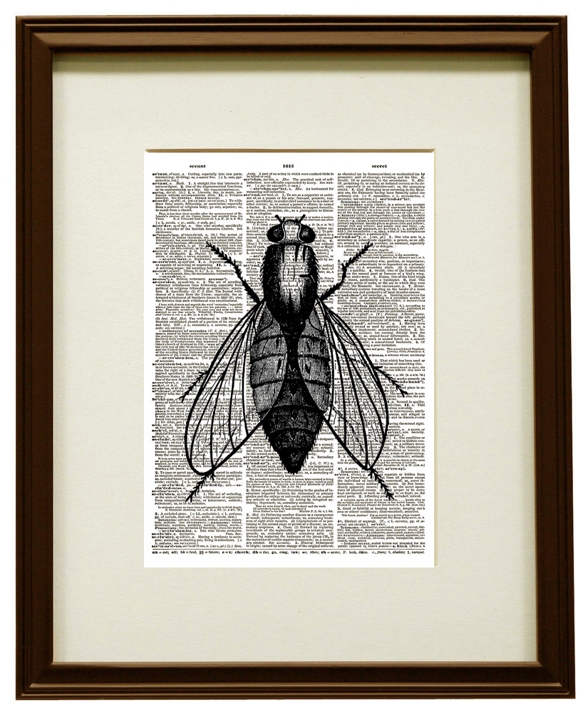 FLY Flying Insect Dictionary Page Art Print No. 0117