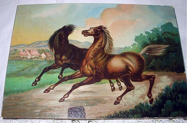 2 horses 01