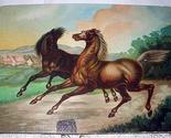 2 horses 01 thumb155 crop