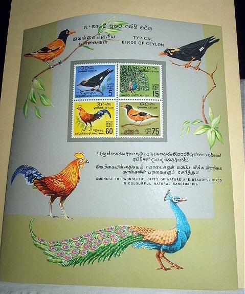 C birds ceylon 01