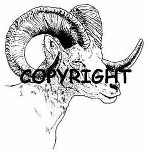 BIGHORN SHEEP SIDEVIEW NEW mounted rubber stamp