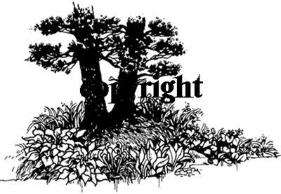 FOLIAGE UNDER TREES NEW RELEASE mounted rubber stamp
