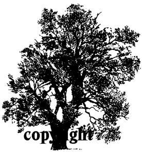 LARGE OAK TREES NEW RELEASE mounted rubber stamp