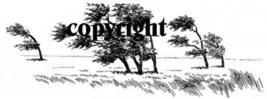 WINDBLOWN TREES~ NEW RELEASE! mounted rubber stamp - $6.50