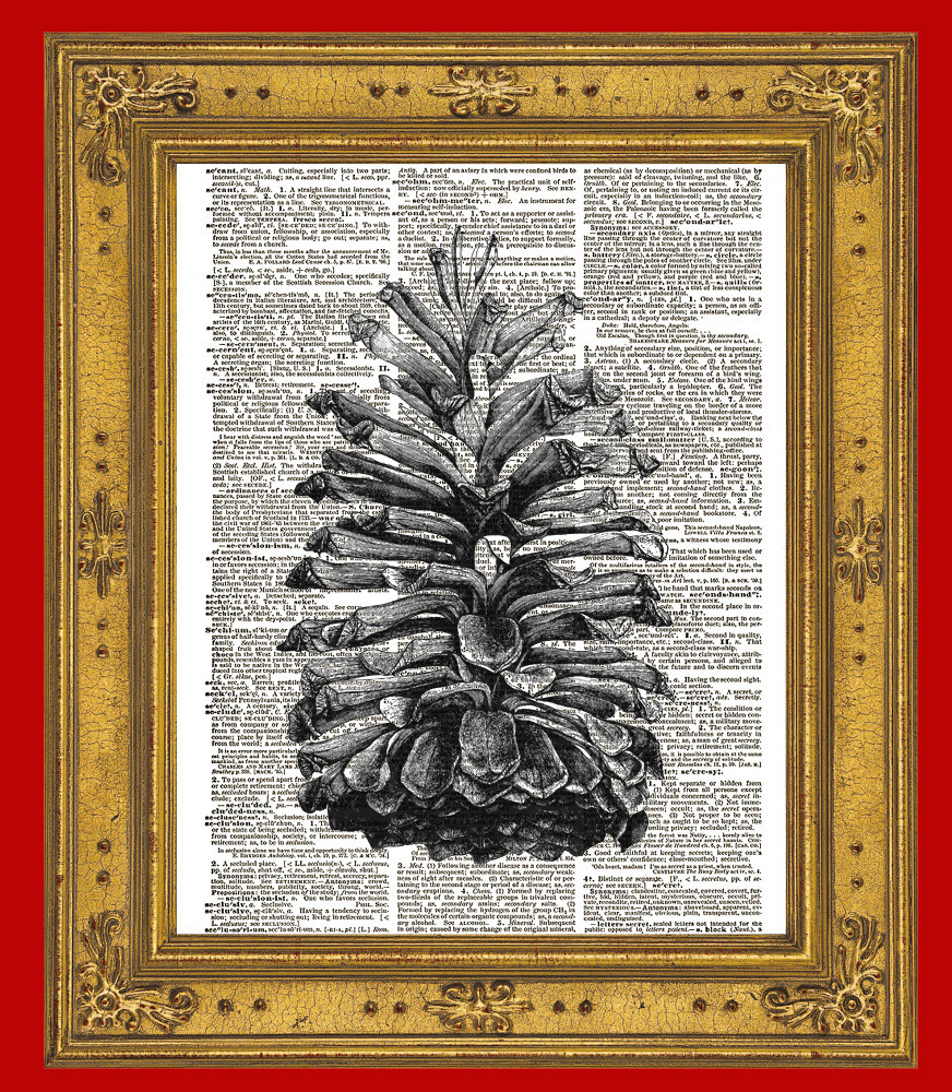 Lovely Large Pinecone from Evergreen Tree Vintage Dictionary Art Print No. 0015