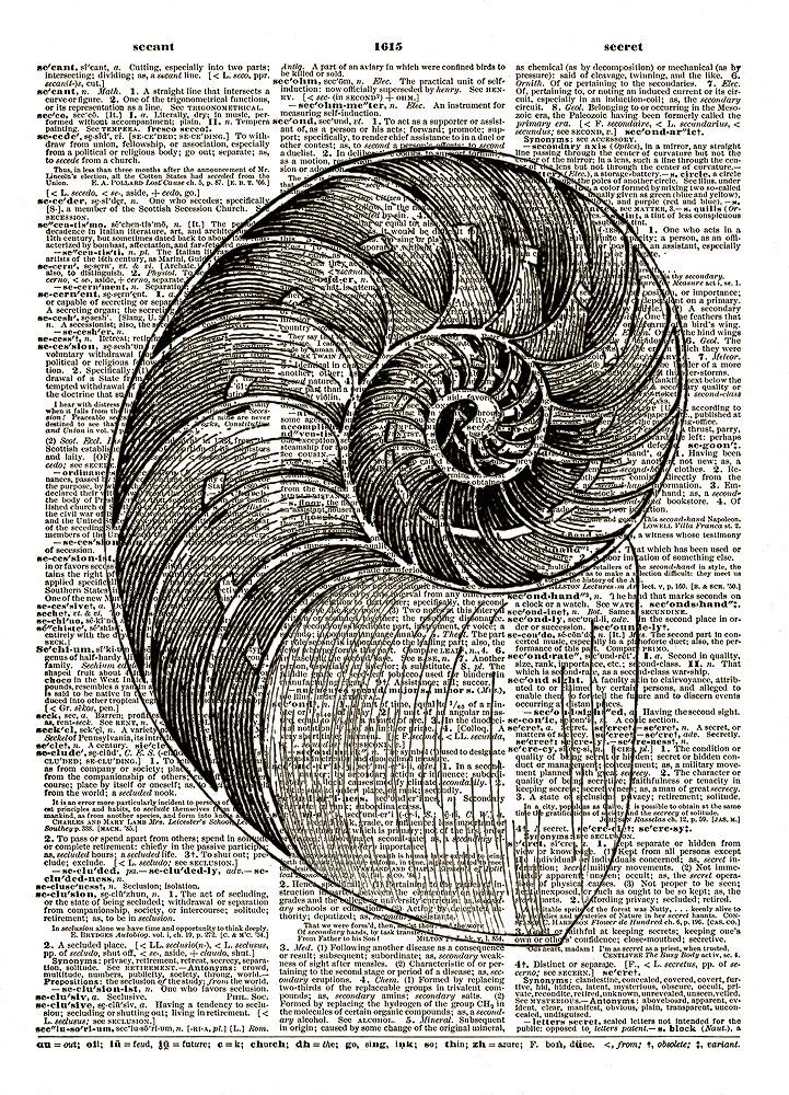 NAUTILUS SHELL Sea Ocean Animal Vintage Dictionary Art Print No.