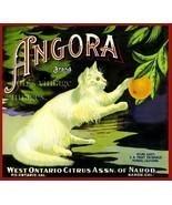 Pomona Ca  Angora Orange Citrus Fruit Crate Label Vintage Art Print - £6.93 GBP