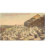 Pigeon Farm on Road of a Thousand Wonders Vintage Post Card - $6.00