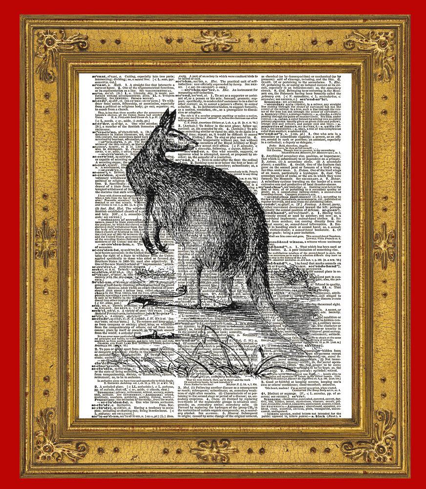 Australian Kangaroo Marsupial Animal Vintage Dictionary Art Print No. 0164