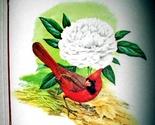 C cardinal folio 06 thumb155 crop