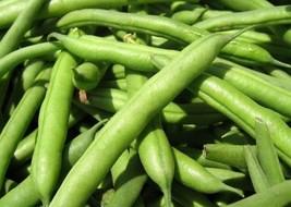 Kentucky Dreamer Greenpod Bean Seed - Bush Beans Garden Seeds (½oz to 4oz) - $4.54+