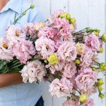 Voyage 2 Pink Pelleted Lisianthus  / Lisianthus Flower Seeds - $21.21