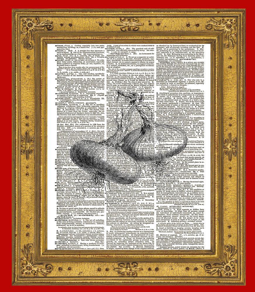 Onion Bulbs Vintage Dictionary Page Art Print No. 0197