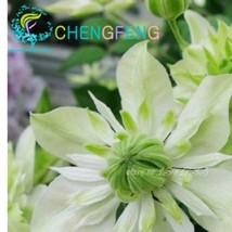 100 Clematis plants For Home& Garden Pink Vine (9), HZ Beautiful Flower ... - $8.89
