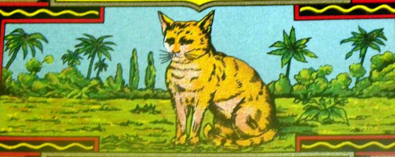 Redo cat dye label 3 001