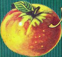 Apple Art! Antel-Salt jus de Pommes Label 1930's