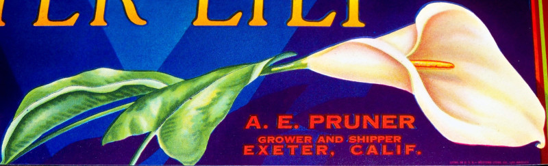 Exeter lily crate label 002