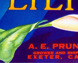 Exeter lily crate label 002 thumb155 crop