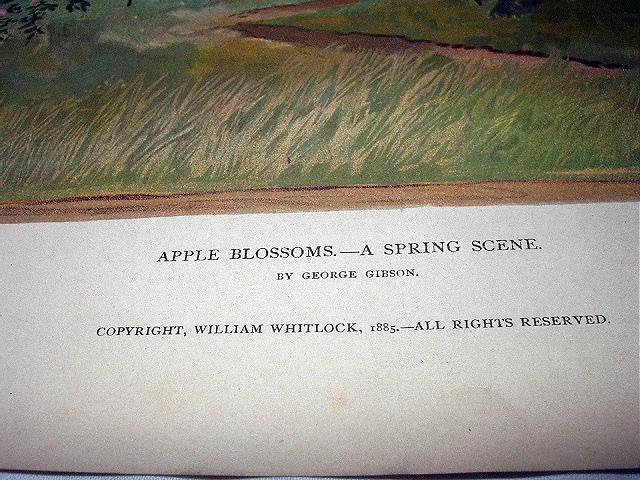 1885-APPLE BLOSSOMS-GORGEOUS-ORIGINAL ANTIQUE CHROMOLITHOGRA