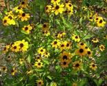 Efn native plants 326 thumb155 crop