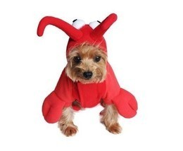 Dog Costume Halloween Red Lobster Outfit Detailed Bodysuit With Claws He... - $28.41+