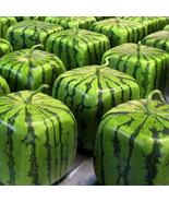 HS Garden - 30 PCS Rare Simple Geometric Square Watermelons Seeds - $2.30