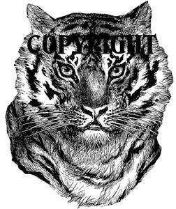 BENGAL TIGER FACE new mounted rubber stamp NEW RELEASE!