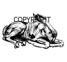 SITTING FOAL HORSE-NEW mounted rubber stamp