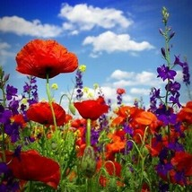 Outdoor Living - 4000++ Red Corn Poppy Seeds Beautiful Flowers - SBF - $21.95