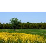 Landscape at Gettysburg,Va. 10x15 Photograph - $179.00
