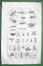INSECTS Dragon  Lantern Fly Locust Mantis - 1782 Copperplate Engraving P... - $11.47
