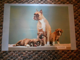 Old Vintage Calendar Paper Picture Print Boxers Dog & Puppies & Care for... - $9.99