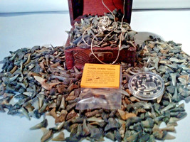 ☆<50 PC. FOSSILIZED SHARK Teeth> MINT Zodiac COIN& Retro EAGLE Necklace OF - $16.56