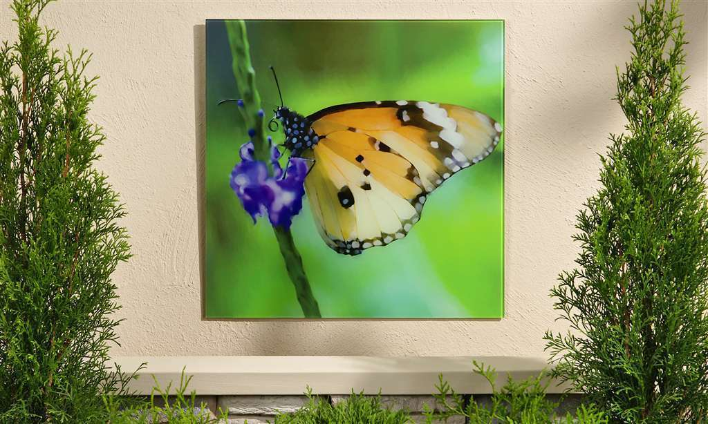 "18""x 18"" Monarch Butterfly Tempered Glass Print - Indoor/Outdoor"