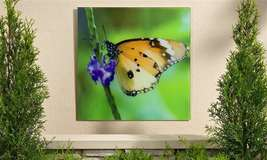 "18""x 18"" Monarch Butterfly Tempered Glass Print - Indoor/Outdoor NEW"