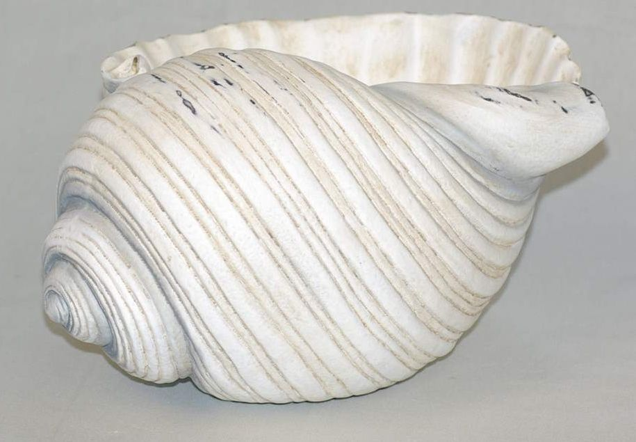 "9"" Nautical Conch Shell Planter Bowl Polystone"