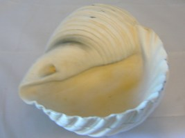 "9"" Nautical Conch Shell Planter Bowl Polystone image 2"