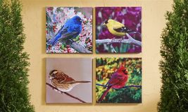 "Set of 4 -18""x 18"" Bird Stretched Canvas Prints-Cardinals & more Indoor/Outdoor"