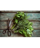 Lot Kit Seed Herb Basil Sage Dill Oregano Thyme Parsley - $17.86